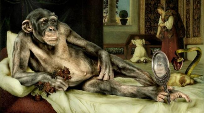 Maymunlar Para Kullanmayı Öğrenince Fuhuşa Başladı