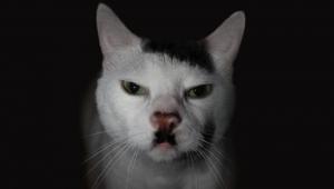 Bilim Bazı Kedilerin Neden Hitler'e Benzediğinin Nedenini Buldu