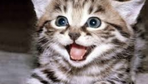 Kedi sevgisinin tarihi