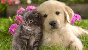 Kedi ve köpeklerle 10 dakikalık etkileşim stres düzeyini düşürüyor