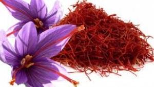 Mucize bitki' safranda hedef 20 kilogram
