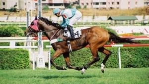 Varlık Fonu at yarışı bahislerini satmak için model arıyor
