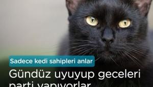 Kedi sahiplerinin yaşadığı komik anlar