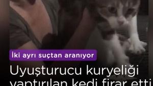 Uyuşturucu kuryesi kedi firar etti