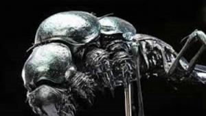 ABD'li profesör Mars'ta böcek buldu!İlk uzaylı ırk keşfedildi...