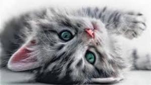 Kedilerin kapılarını açıp serbest bırakan 'asi kedi Quilty' tecrite alındı