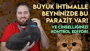 Kedinizin Taşıdığı Parazit, Beyninizi ve Cinsel Dürtülerinizi Nasıl Kontrol Ediyor?