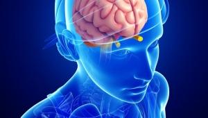 Ruh ve beyin arasında iletişim sağlayan epifiz bezi nedir?