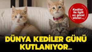 Dünya Kediler Günü'nde, kediler hakkında bilmeniz gereken 5 ilginç bilgi