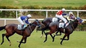 At yarışının gerisindeki sistematik zulüm