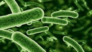 Milyonlarca yıllık mikropları canlandırdılar