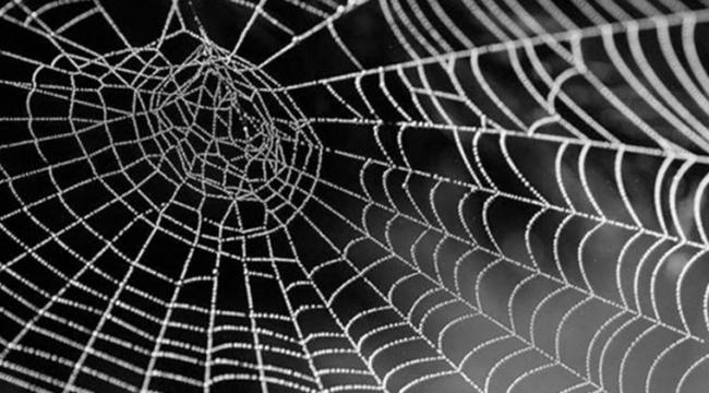 Örümcek ağının sırrı ne?