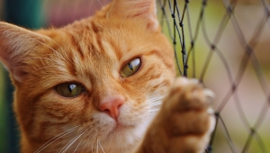 Uyuşturucu kuryesi kedi, tutulduğu hapishaneden kaçtı