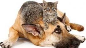 Kedi ve köpekler için şok korona uyarısı! Şaşırtan araştırma