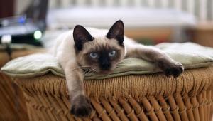 Kedilerin kontrol manyağı olduğunun 8 kanıtı