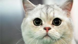 Kediniz sizi aldatıyor mu ya da o gerçekten 'sizin kediniz' mi?