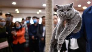 Kediler Sakinleştirici kullanıyorlar