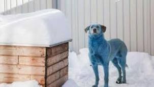 Rusya'da mavi köpeklerden sonra pembe ve yeşil köpekler de görüldü
