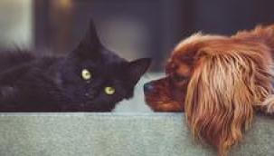 Kedi, köpek ve gelincik sahipleri dikkat!