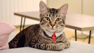 Site bahçesinde 'kedi bakma' kavgasında emsal karar