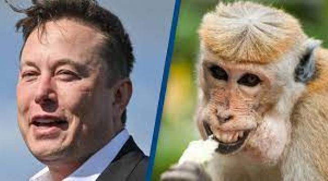 Elon Musk'ın 'beyin çipi' projesi bir maymun üzerinde test edildi