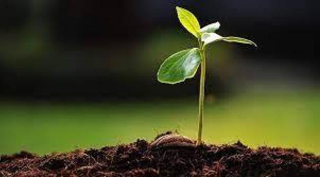 Bitkiler asla yanlış sonuç vermiyordu İNANILMAZ