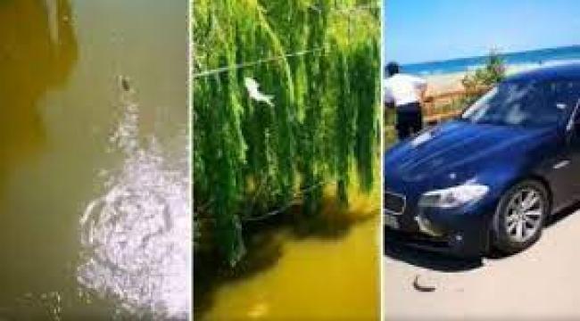 Akıllara durgunluk veren olay! Balığa araba çarptı