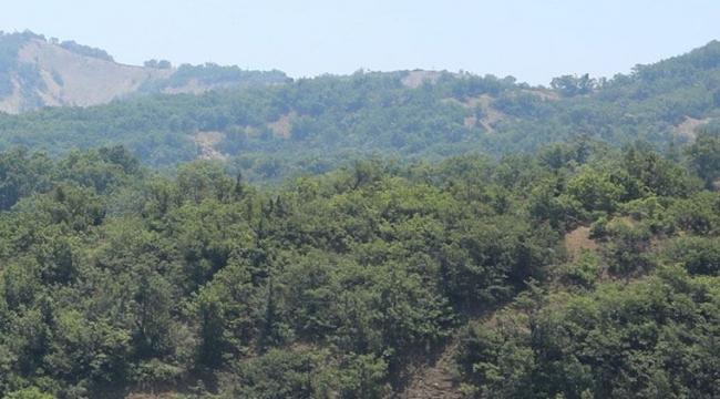 Bingöl'de ormanlık alanlara giriş yasaklandı