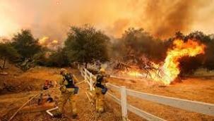 Orman yangınları neden artıyor?