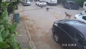 Otomobille yolda yatan köpeğin üzerinden geçti