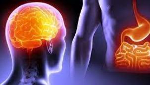 Beyin ve bağırsak ilişkisi