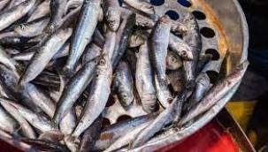 Uzmanlar araştırdı! Marmara'dan çıkan balık tüketilir mi?