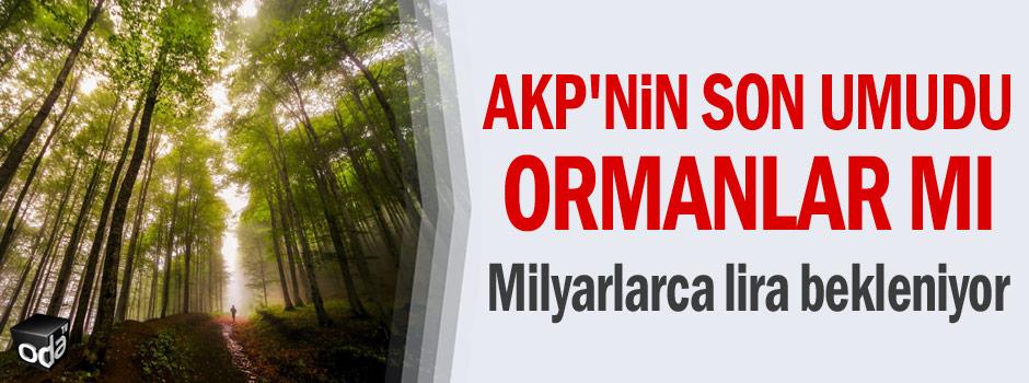 AKP'nin son umudu ormanlar mı