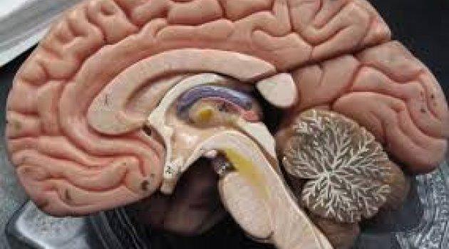 Bilim İnsanları Kafatası ve Beyin Arasında Gizli Tüneller Keşfetti