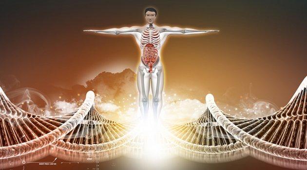 İnsan vücudunda yeni bir organ keşfedildi: Mezenter