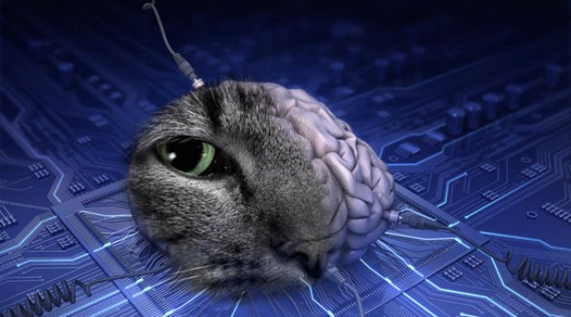 Mavi Beyin Projesi