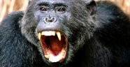 İstanbul'da maymun dehşeti! Çocuklara saldırdı