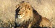 Enteresan Sorular Ve Cevapları Aslanlar bir günde 50 kez sevişebilirler.