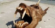 Marmara Denizi Canavarı
