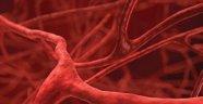 İnsan Kemiklerinde Tamamıyla Yeni Bir Kan Damarı Türü Bulundu