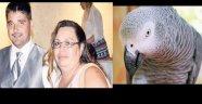 Amerika'da papağanın tanıklığı hapse götürdü