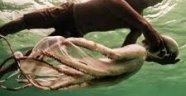 Amfibi Yaşam Tarzı Sebebiyle Evrim Geçiren Kabile