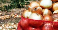 Anadolu 4 bin yıl önce soğan ihraç ediyordu