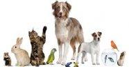 Evcil Hayvan Beslemenin faydaları!