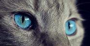 Gözler, Dünyayı Farklı Şekilde Görmeye Nasıl Evrildi?