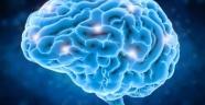 Her İnsanın Benzersiz Bir Beyin Anatomisine Sahip