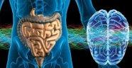 İnsan Beyninde Tıpkı Bağırsaktaki Gibi Bakteriler Bulunuyor ve Bu Bakteriler Bağırsaklarla İlişkili
