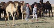 Suudi Arabistan Katar'ın develerini sınır dışı etti