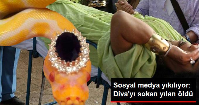 Bülent Ersoy'u sokan yılan öldü