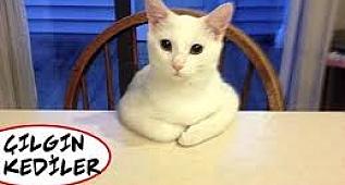 Gülme krizine sokan kediler